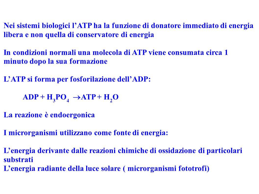 Nei sistemi biologici l'ATP ha la funzione di donatore immediato di energia libera e non quella di conservatore di energia