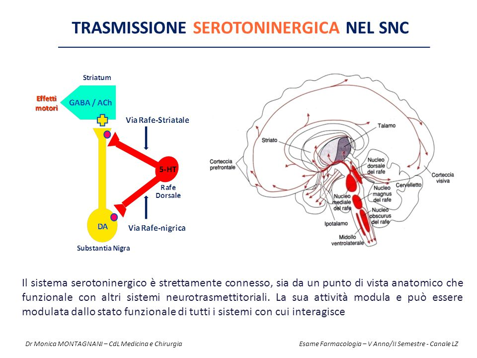 TRASMISSIONE SEROTONINERGICA NEL SNC