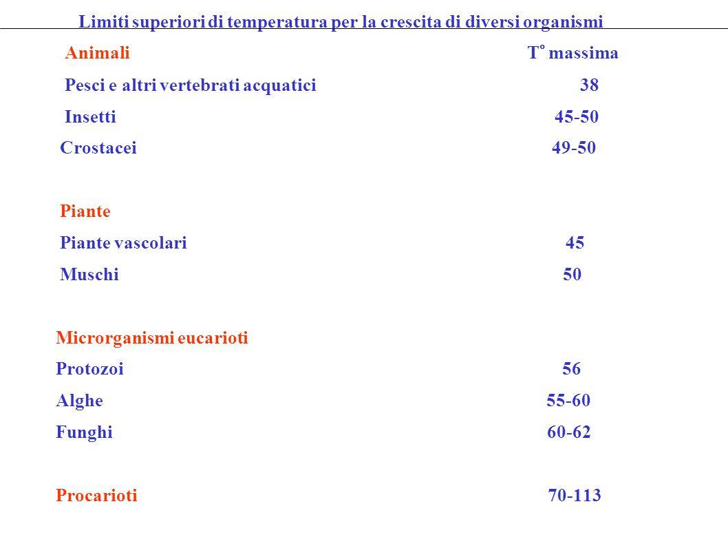 Limiti superiori di temperatura per la crescita di diversi organismi