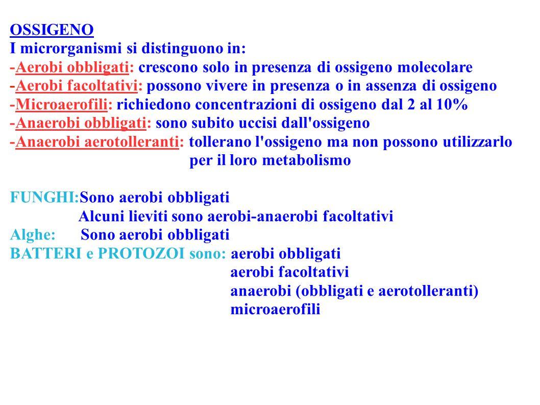 OSSIGENO I microrganismi si distinguono in: -Aerobi obbligati: crescono solo in presenza di ossigeno molecolare.