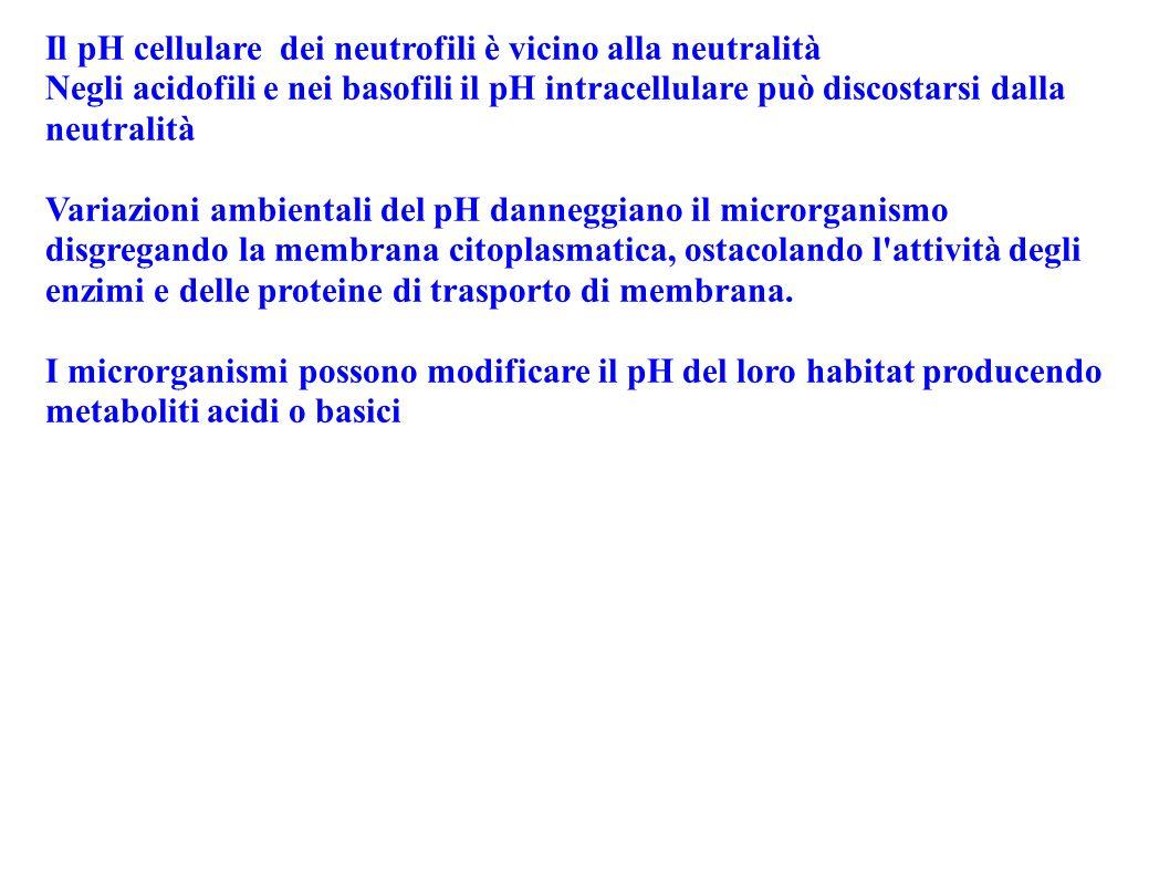 Il pH cellulare dei neutrofili è vicino alla neutralità