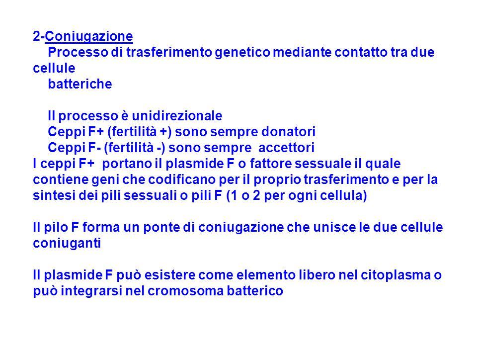 2-Coniugazione Processo di trasferimento genetico mediante contatto tra due cellule batteriche Il processo è unidirezionale Ceppi F+ (fertilità +) sono sempre donatori Ceppi F- (fertilità -) sono sempre accettori I ceppi F+ portano il plasmide F o fattore sessuale il quale contiene geni che codificano per il proprio trasferimento e per la sintesi dei pili sessuali o pili F (1 o 2 per ogni cellula) Il pilo F forma un ponte di coniugazione che unisce le due cellule coniuganti Il plasmide F può esistere come elemento libero nel citoplasma o può integrarsi nel cromosoma batterico