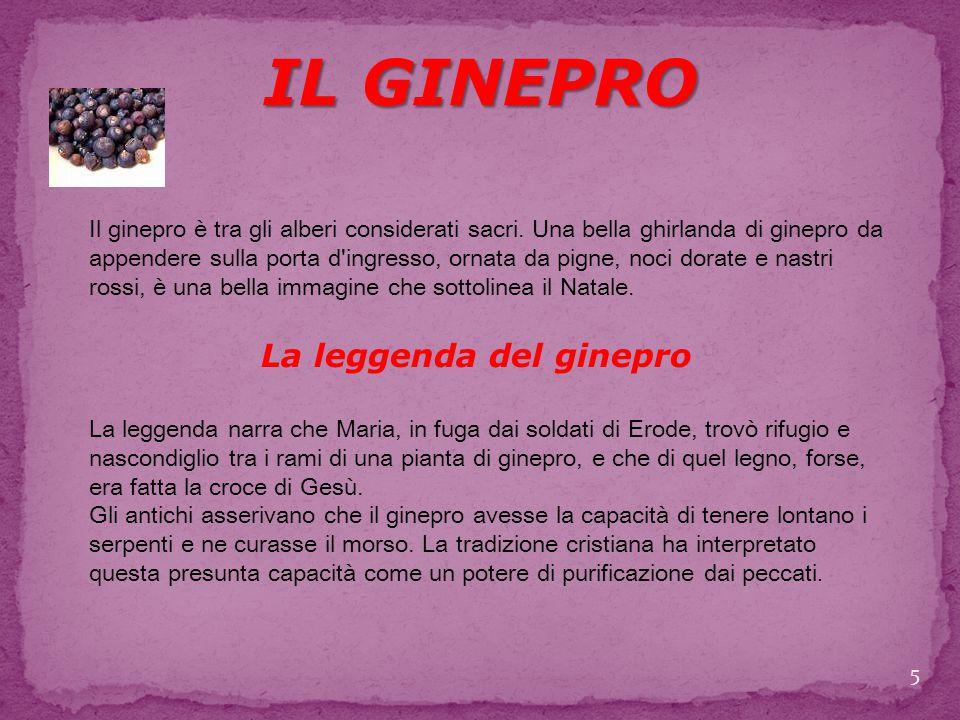 La leggenda del ginepro