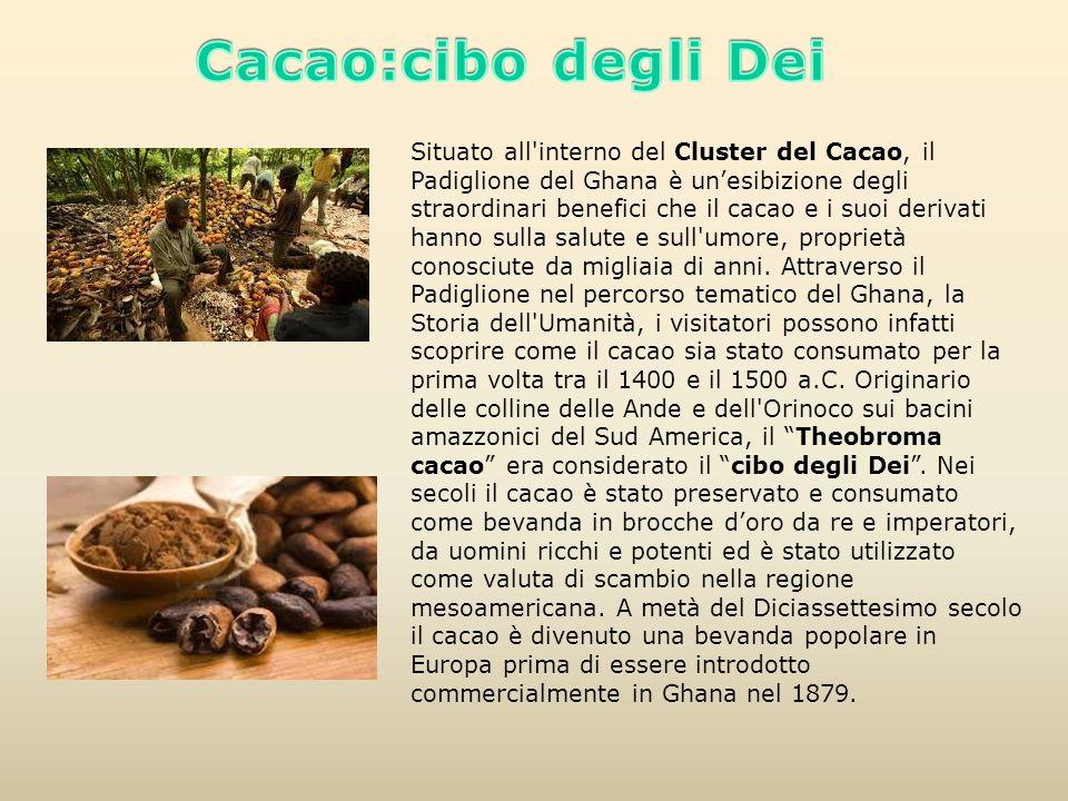 Cacao:cibo degli Dei