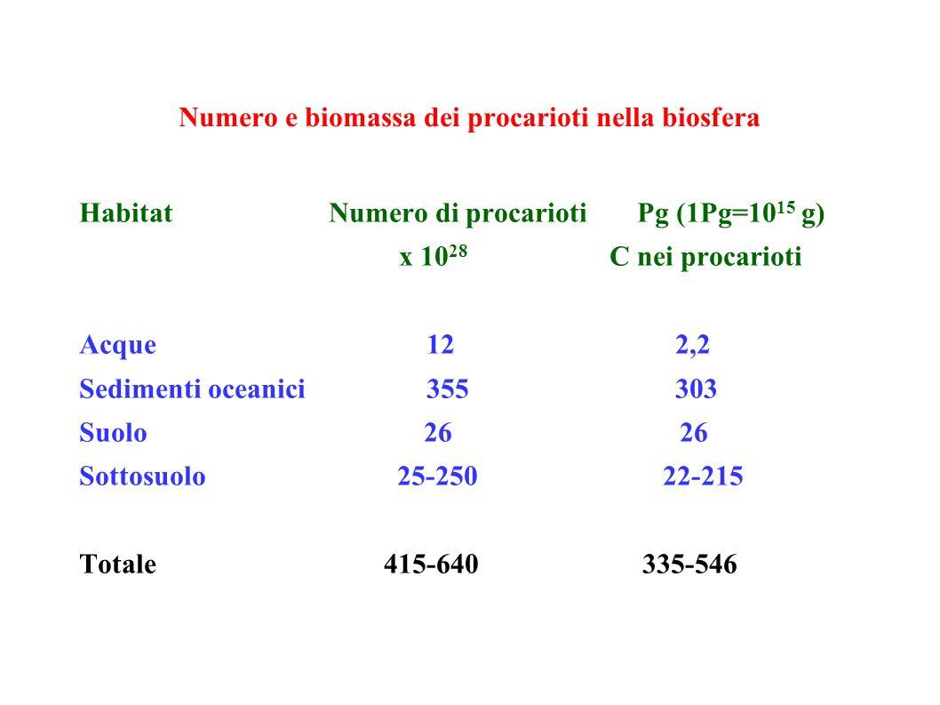 Numero e biomassa dei procarioti nella biosfera