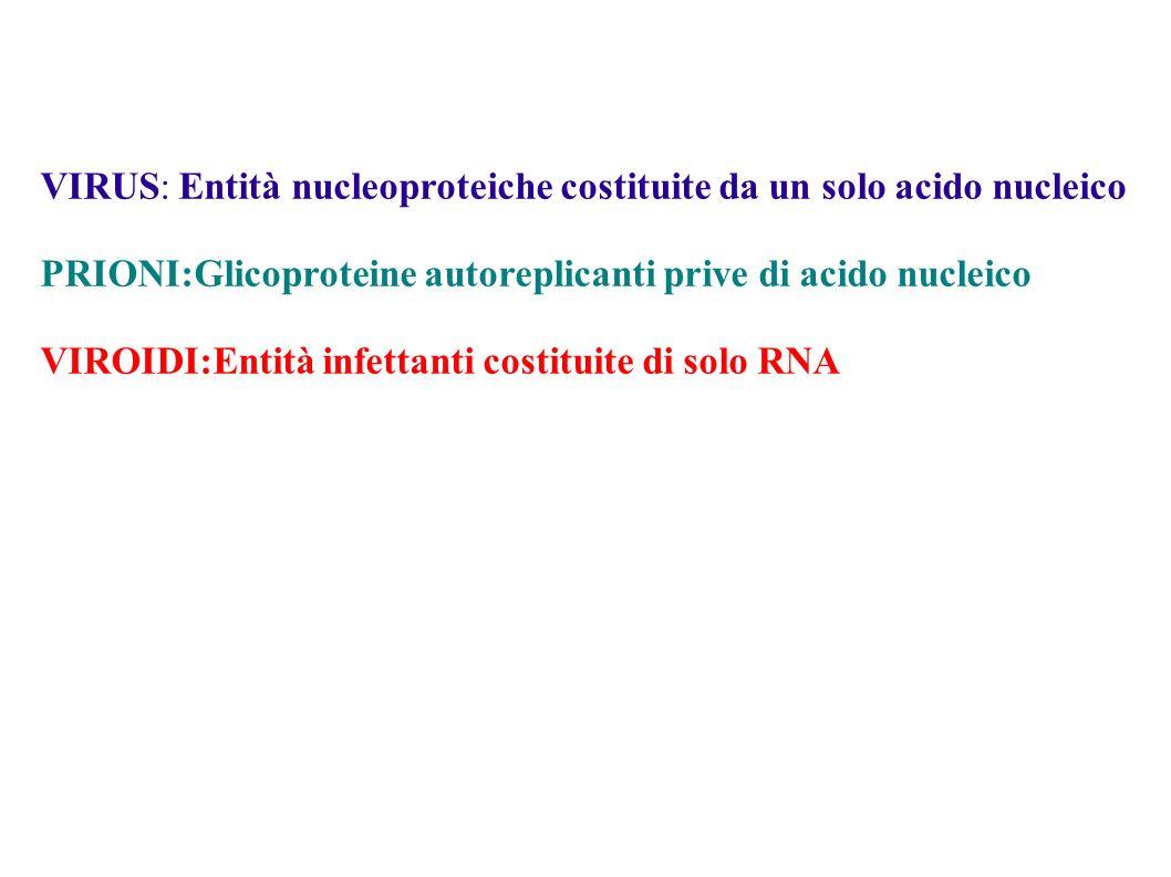 VIRUS: Entità nucleoproteiche costituite da un solo acido nucleico