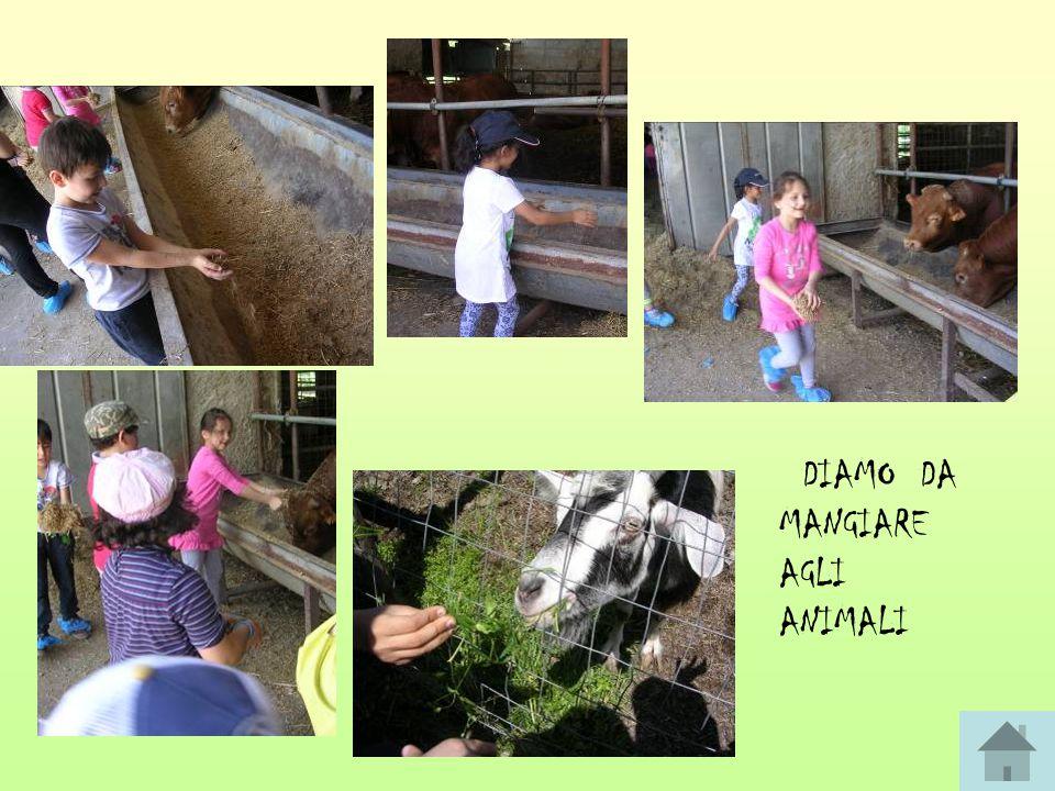 DIAMO DA MANGIARE AGLI ANIMALI