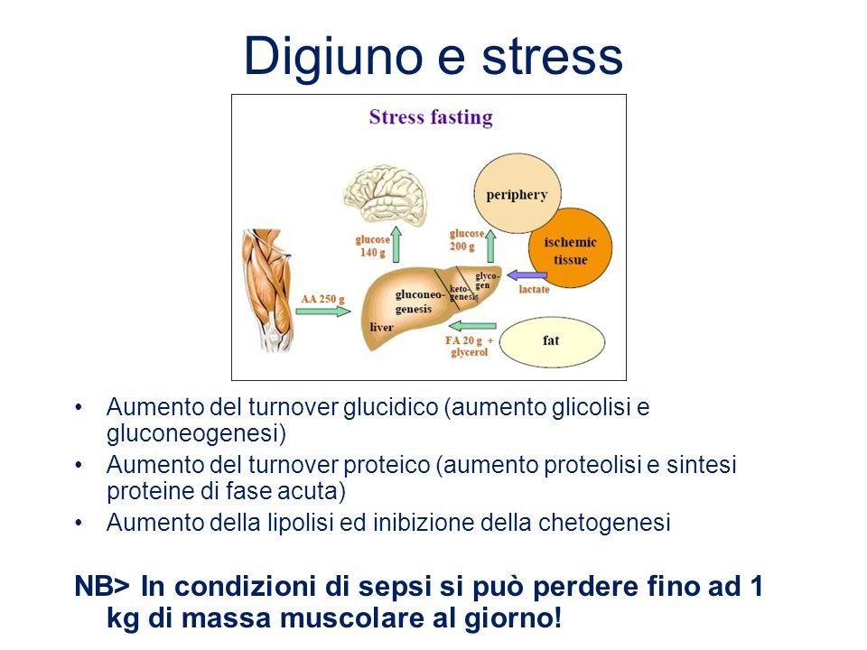 Digiuno e stress Aumento del turnover glucidico (aumento glicolisi e gluconeogenesi)
