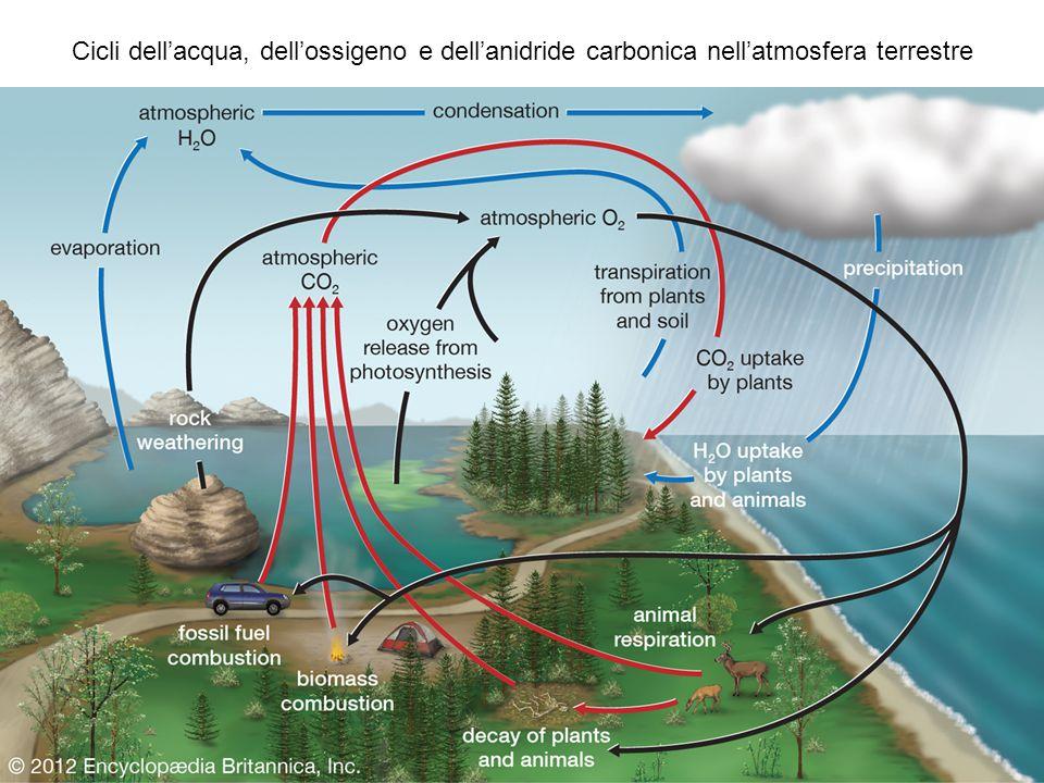 Cicli dell'acqua, dell'ossigeno e dell'anidride carbonica nell'atmosfera terrestre