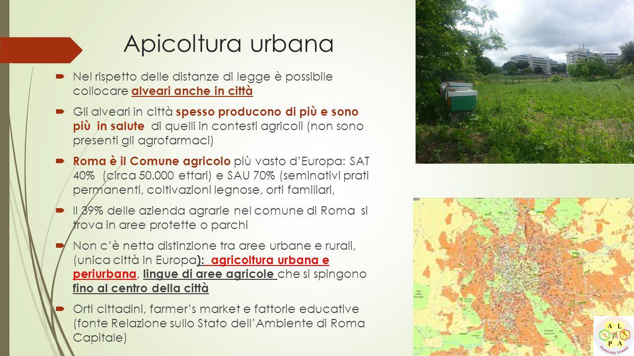 Apicoltura urbana Nel rispetto delle distanze di legge è possibile collocare alveari anche in città.