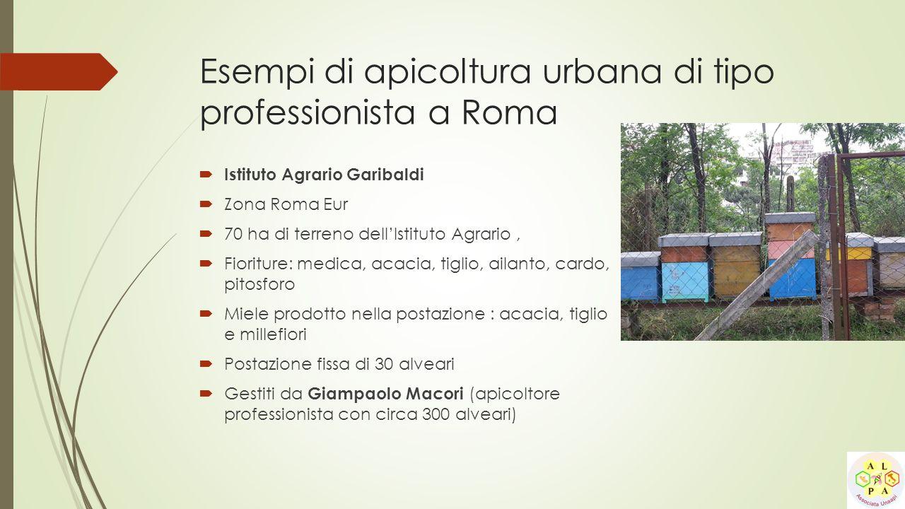 Esempi di apicoltura urbana di tipo professionista a Roma