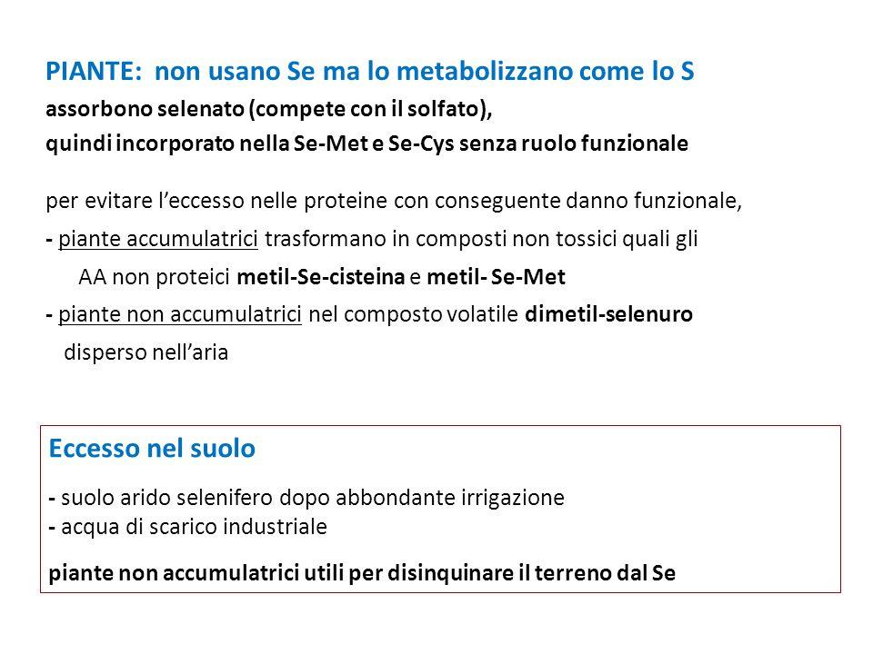 PIANTE: non usano Se ma lo metabolizzano come lo S assorbono selenato (compete con il solfato),