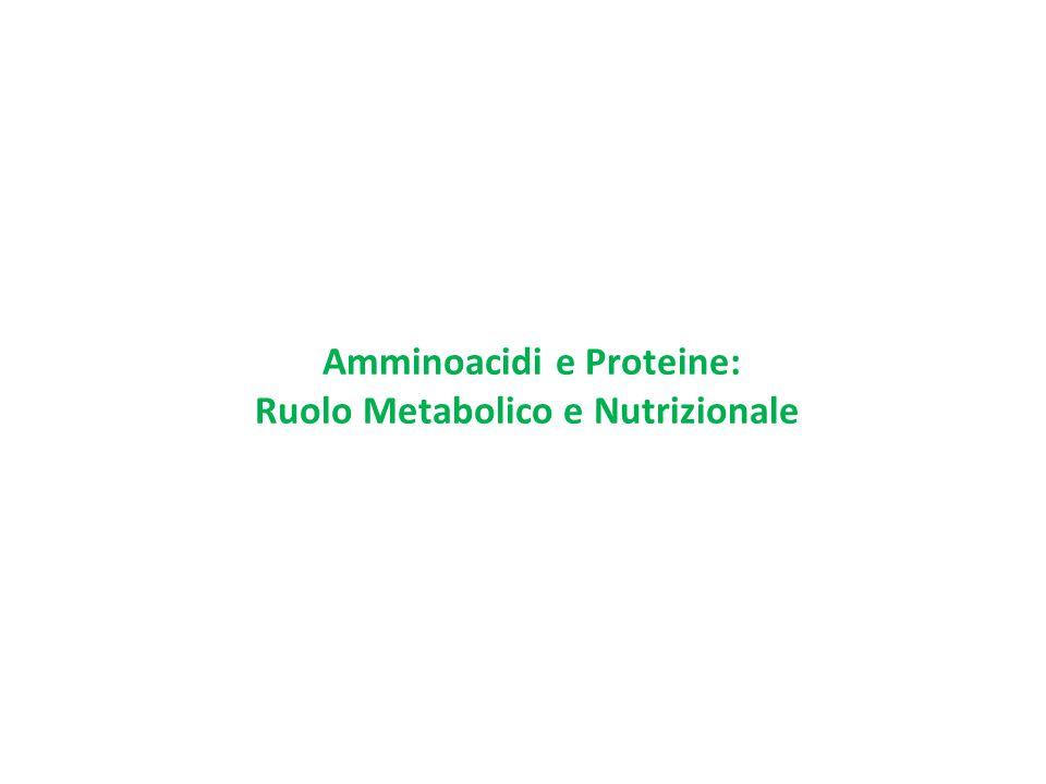 Amminoacidi e Proteine: Ruolo Metabolico e Nutrizionale