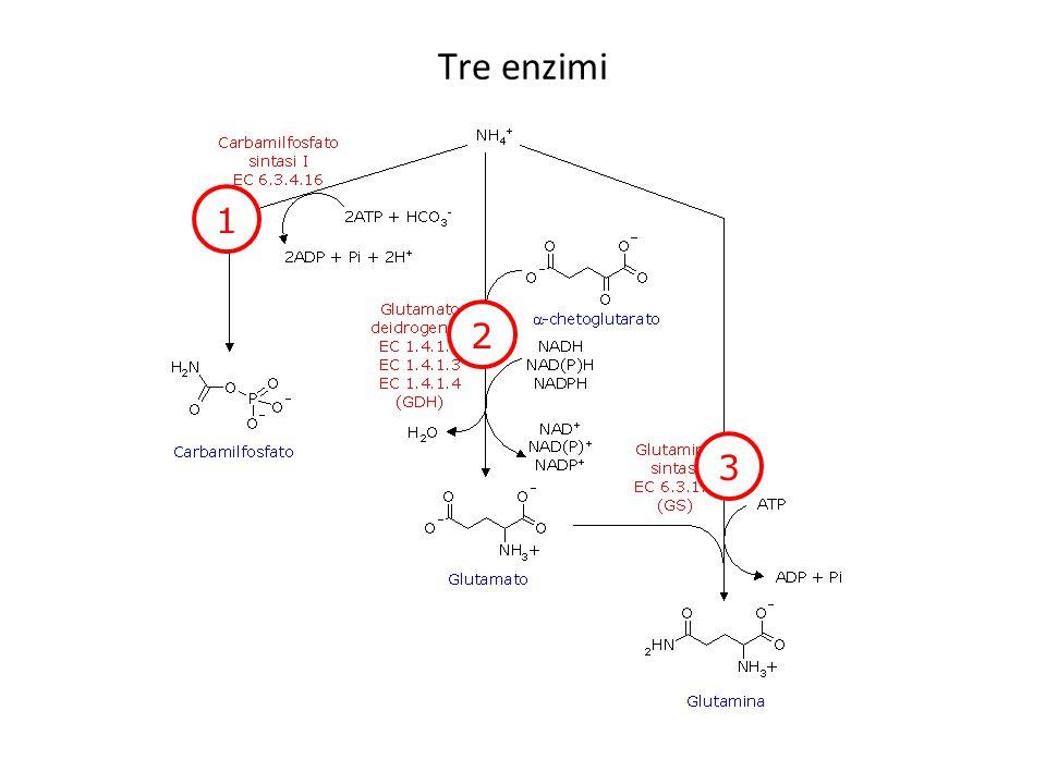 Tre enzimi 1 2 3