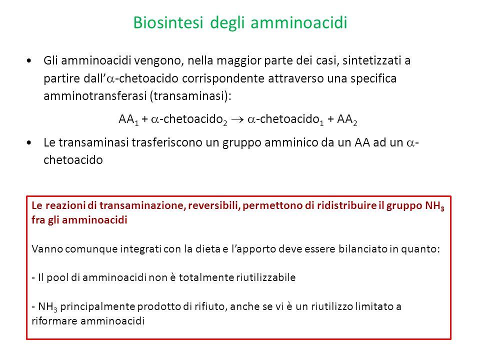 Biosintesi degli amminoacidi