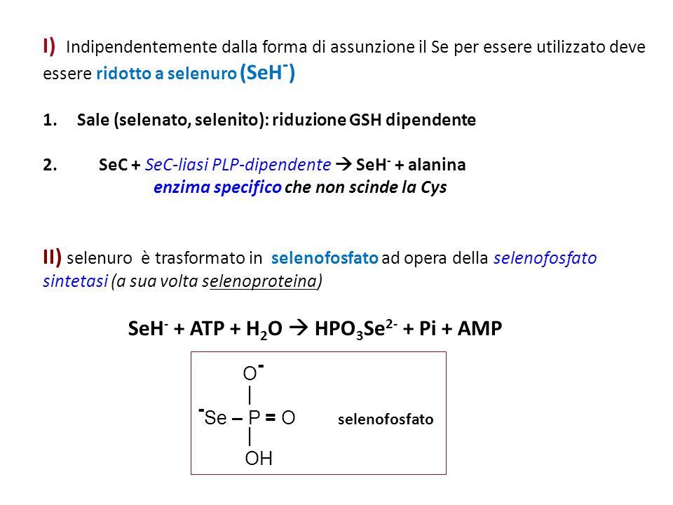 -Se – P = O selenofosfato
