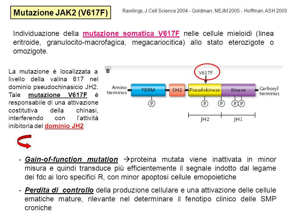 Mutazione JAK2 (V617F) Rawlings, J Cell Science 2004 - Goldman, NEJM 2005 - Hoffman, ASH 2005.