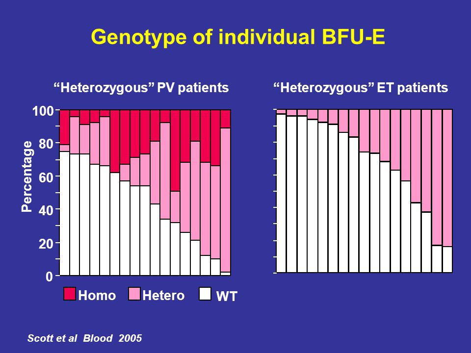 Genotype of individual BFU-E