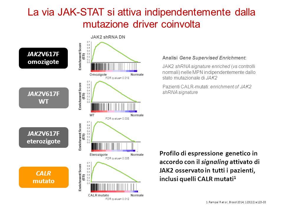 La via JAK-STAT si attiva indipendentemente dalla mutazione driver coinvolta