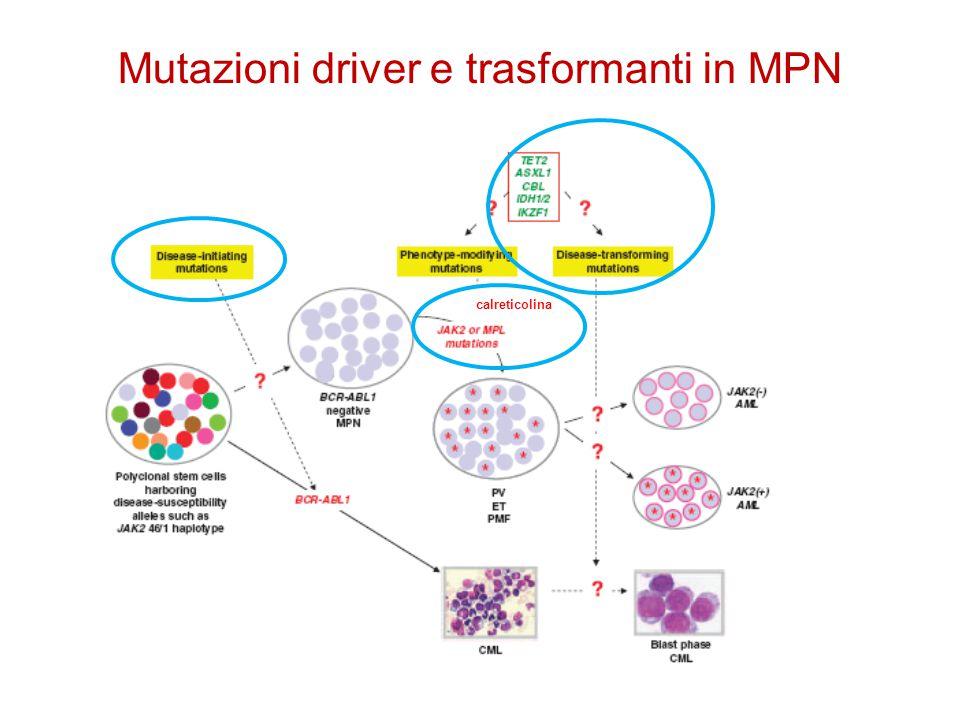 Mutazioni driver e trasformanti in MPN