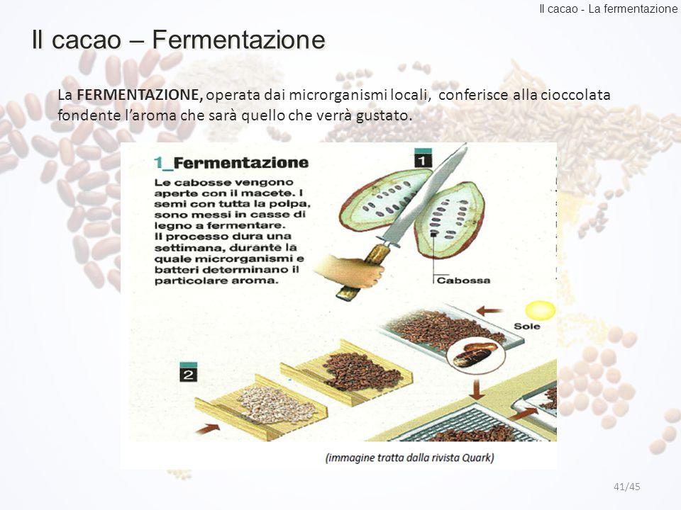 Il cacao – Fermentazione