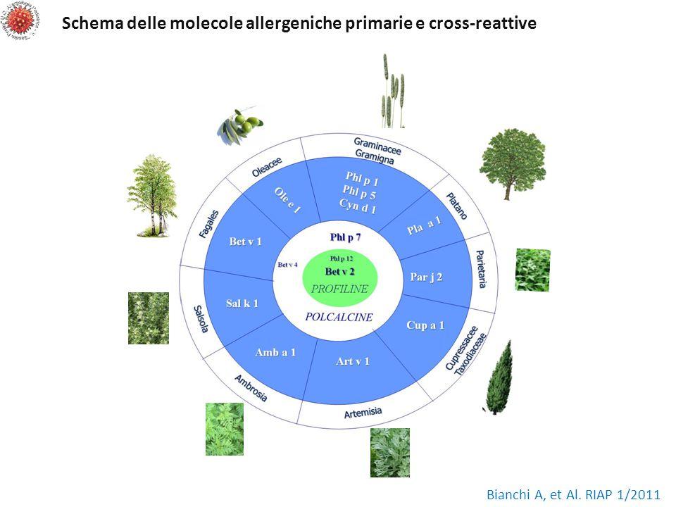 Schema delle molecole allergeniche primarie e cross-reattive