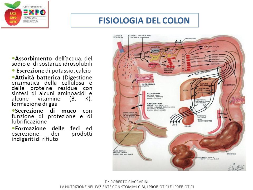 FISIOLOGIA DEL COLON Assorbimento dell'acqua, del sodio e di sostanze idrosolubili. Escrezione di potassio, calcio.