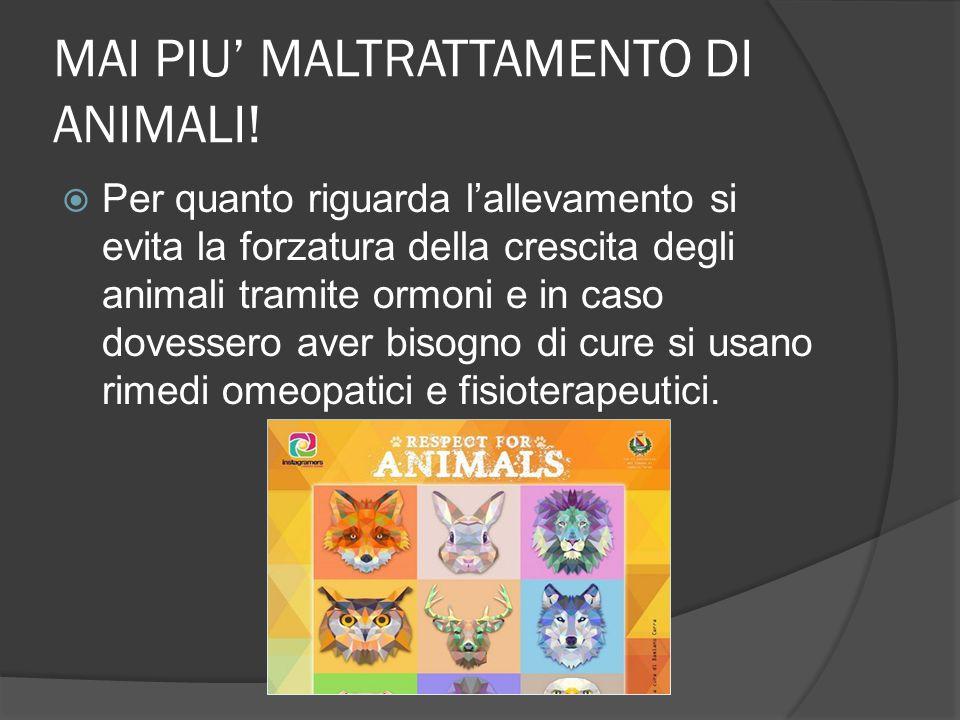 MAI PIU' MALTRATTAMENTO DI ANIMALI!