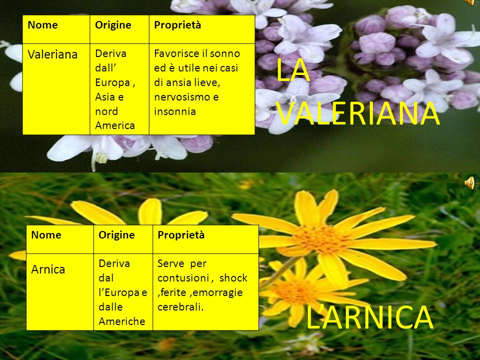 LA VALERIANA L'ARNICA Valeriana Arnica Nome Origine Proprietà