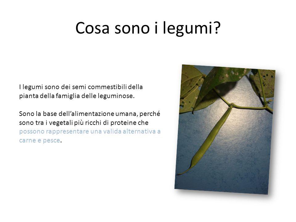 Cosa sono i legumi I legumi sono dei semi commestibili della pianta della famiglia delle leguminose.