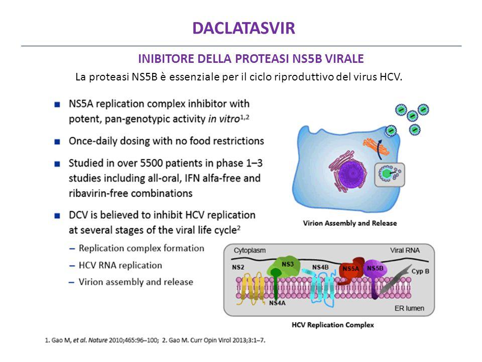 La proteasi NS5B è essenziale per il ciclo riproduttivo del virus HCV.