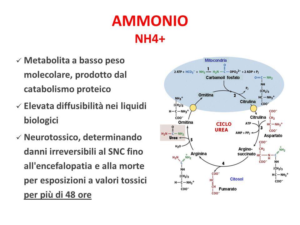 AMMONIO NH4+ Metabolita a basso peso molecolare, prodotto dal catabolismo proteico. Elevata diffusibilità nei liquidi biologici.