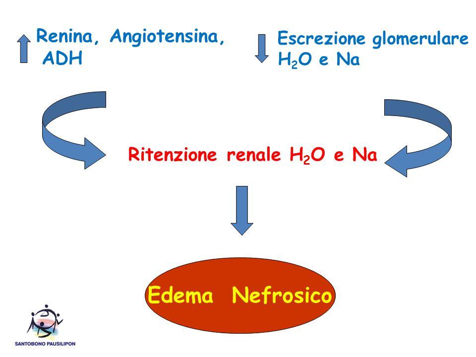 Edema Nefrosico Escrezione glomerulare ADH Ritenzione renale H2O e Na