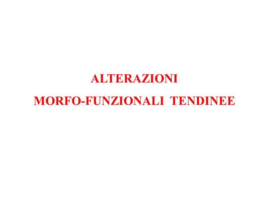 MORFO-FUNZIONALI TENDINEE