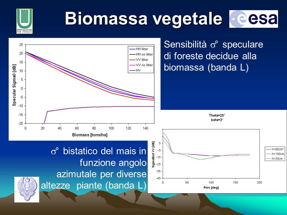 Biomassa vegetale Sensibilità s° speculare di foreste decidue alla biomassa (banda L)