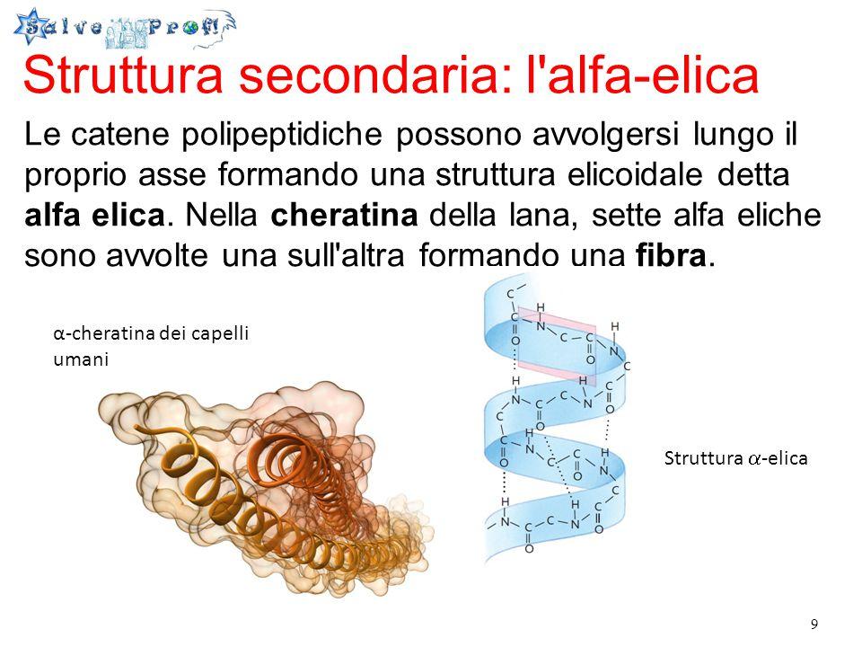 Struttura secondaria: l alfa-elica