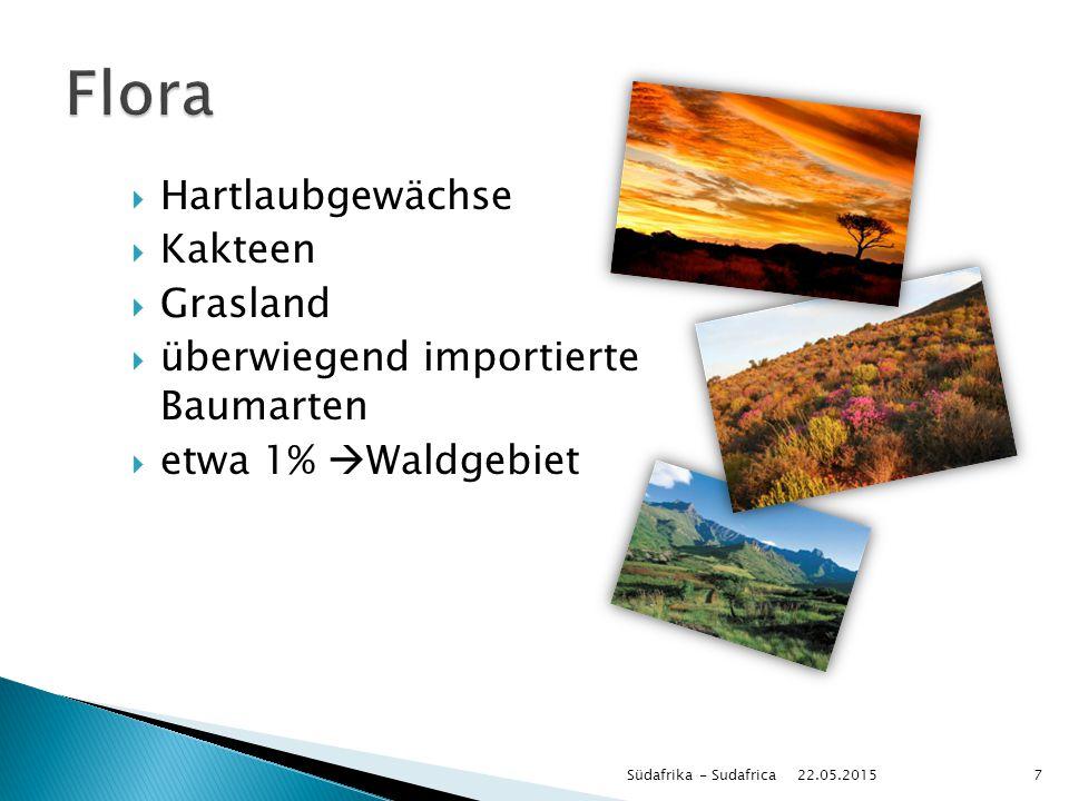 Flora Hartlaubgewächse Kakteen Grasland