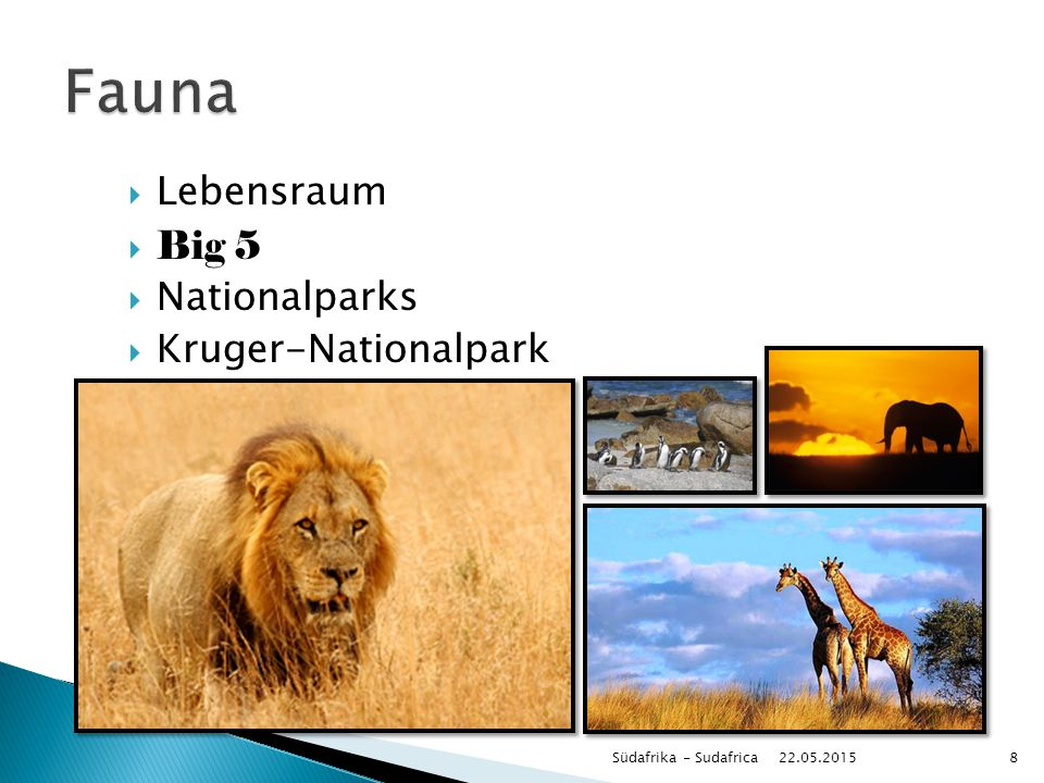 Fauna Lebensraum Big 5 Nationalparks Kruger-Nationalpark