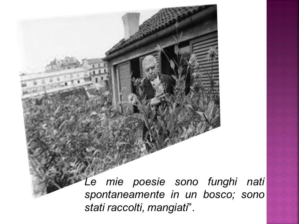 Le mie poesie sono funghi nati spontaneamente in un bosco; sono stati raccolti, mangiati .