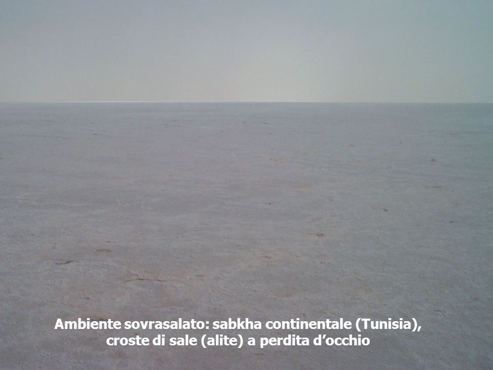 Ambiente sovrasalato: sabkha continentale (Tunisia),