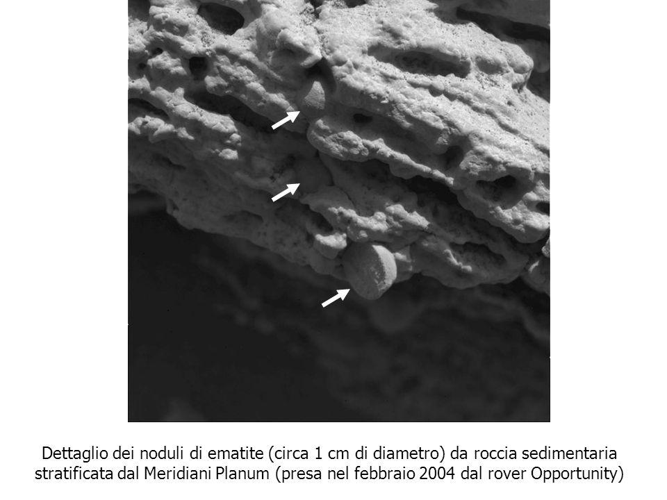 Dettaglio dei noduli di ematite (circa 1 cm di diametro) da roccia sedimentaria