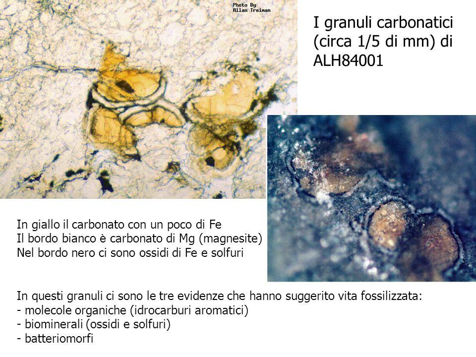 I granuli carbonatici (circa 1/5 di mm) di ALH84001