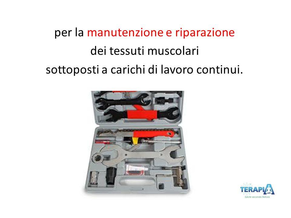 per la manutenzione e riparazione dei tessuti muscolari