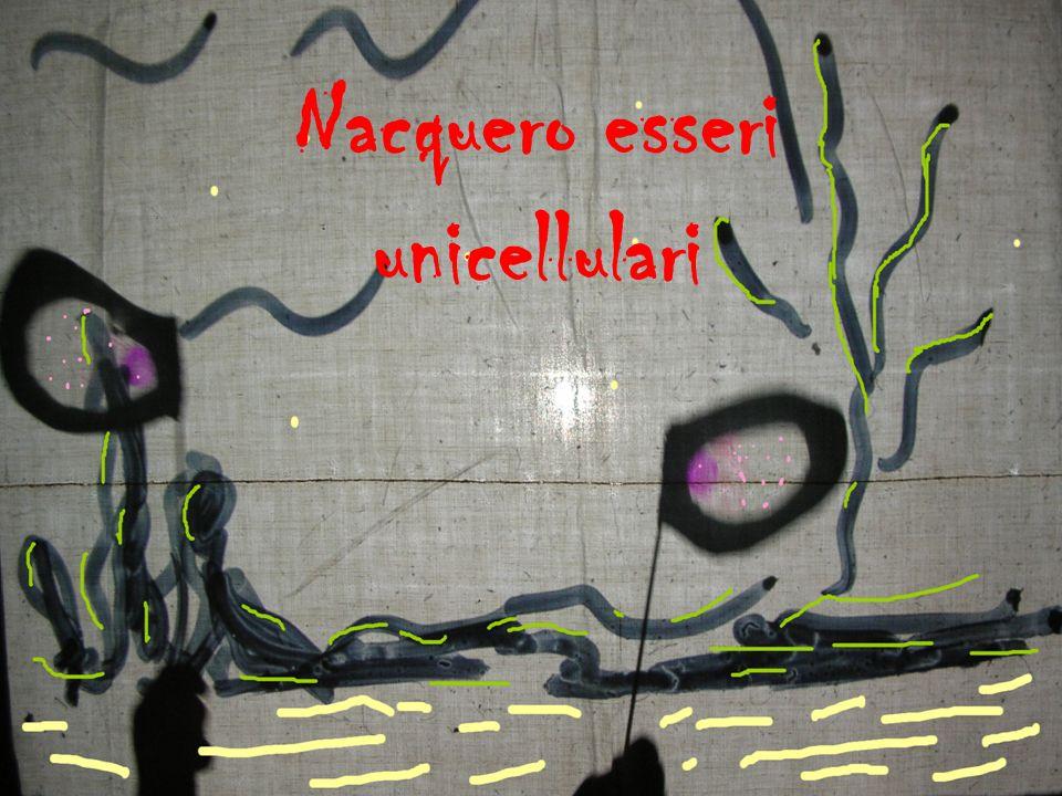 Nacquero esseri unicellulari