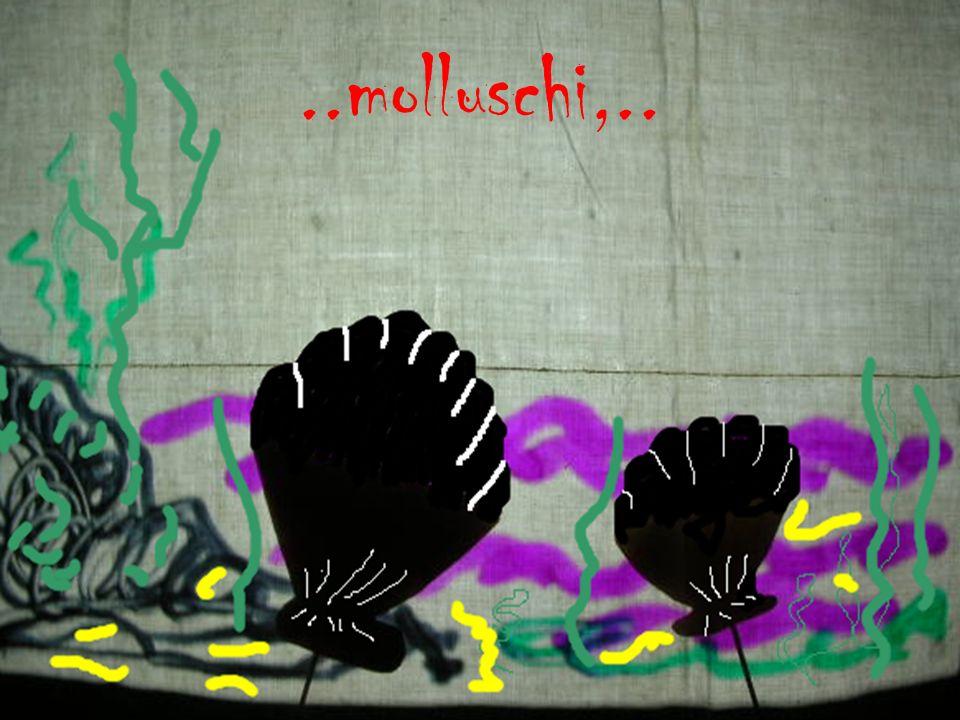 ..molluschi,..