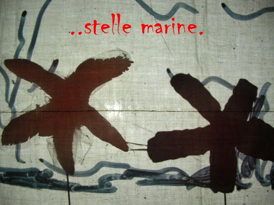 ..stelle marine.