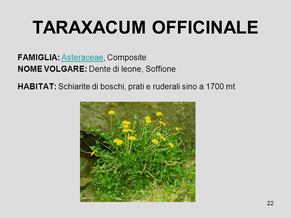 TARAXACUM OFFICINALE FAMIGLIA: Asteraceae, Composite
