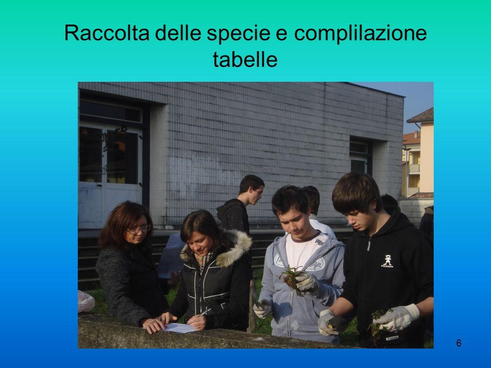 Raccolta delle specie e complilazione tabelle