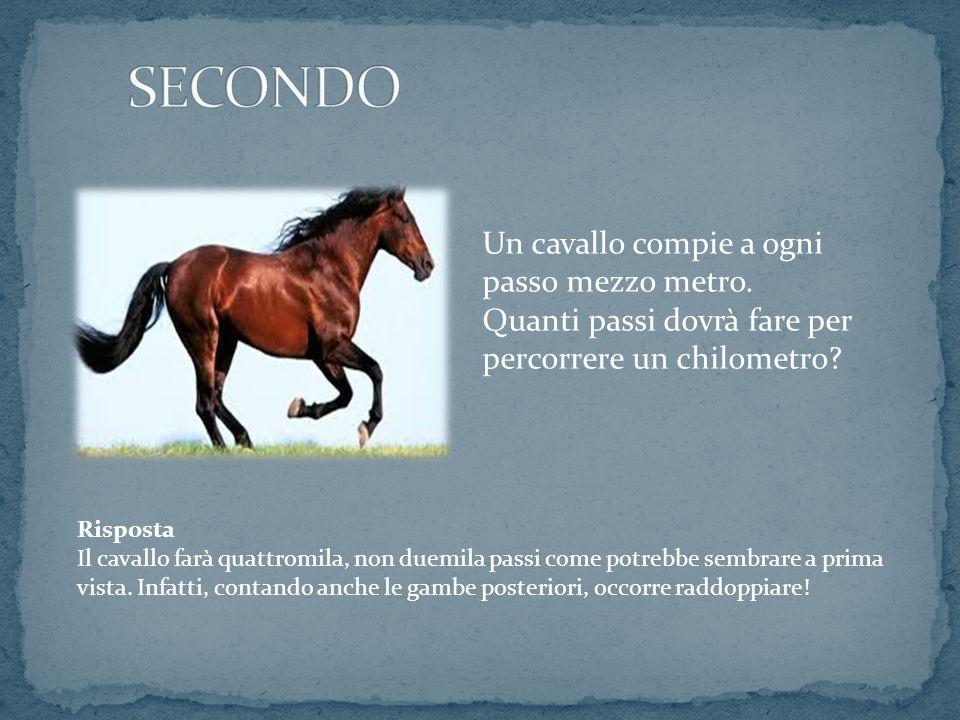 SECONDO Un cavallo compie a ogni passo mezzo metro. Quanti passi dovrà fare per percorrere un chilometro