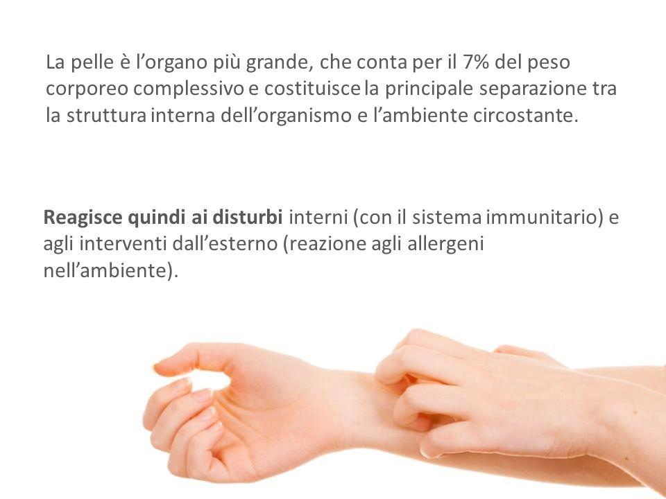 La pelle è l'organo più grande, che conta per il 7% del peso corporeo complessivo e costituisce la principale separazione tra la struttura interna dell'organismo e l'ambiente circostante.